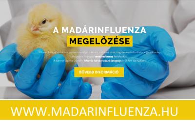 Madárinfluenza tájékoztató